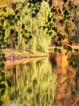 Bellissimo paesaggio autunnale con un grande salice diffuso sull'acqua