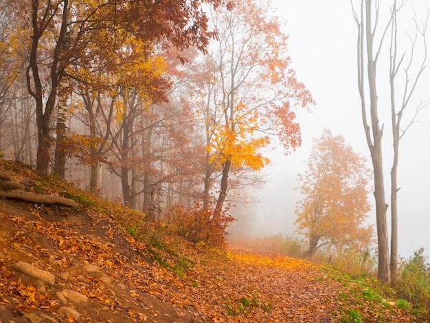 Bellissimo paesaggio autunnale con alberi e nebbia sul fianco della montagna.