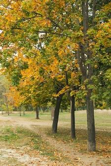 Bellissimo parco autunnale con alberi con foglie gialle