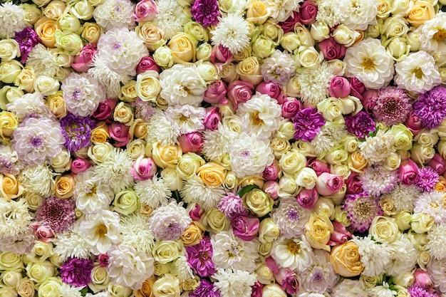 Bellissimo sfondo di rose colorate e crisantemi