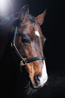 Bellissimo ritratto di cavallo baio sulla parete scura