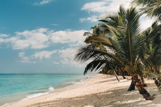 Bellissima spiaggia, palme e nuvole all'orizzonte. africa, mauritius, sud, vicino a le morne.