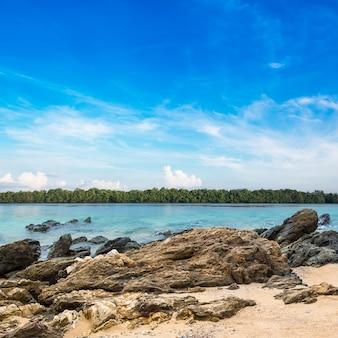 Bellissima spiaggia e foresta di mangrovie tropicale al litorale sul cielo blu