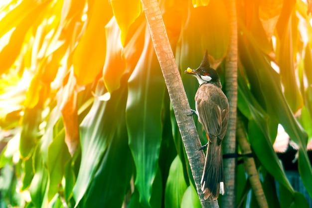 Bellissimi passeri che si appollaiano mentre mangiano sui rami degli alberi