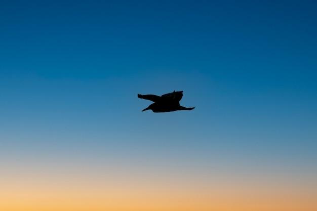 Bellissimi uccelli che volano al tramonto