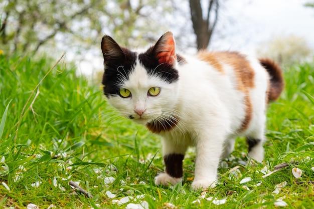 Bellissimo gatto bianco e nero in giardino