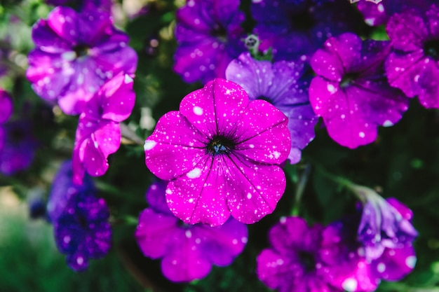 Bellissimi fiori che sbocciano in giardino, sfondo estivo. fotografia fiore magico su sfondo sfocato