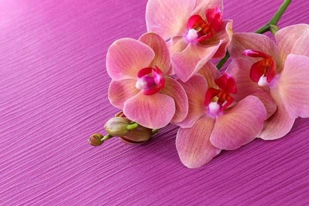 Bellissima orchidea in fiore sul rosa
