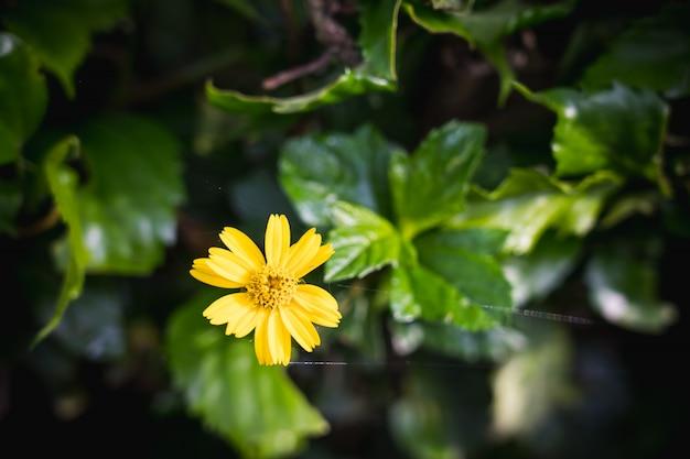 Bei fiori gialli di fioritura nel giardino