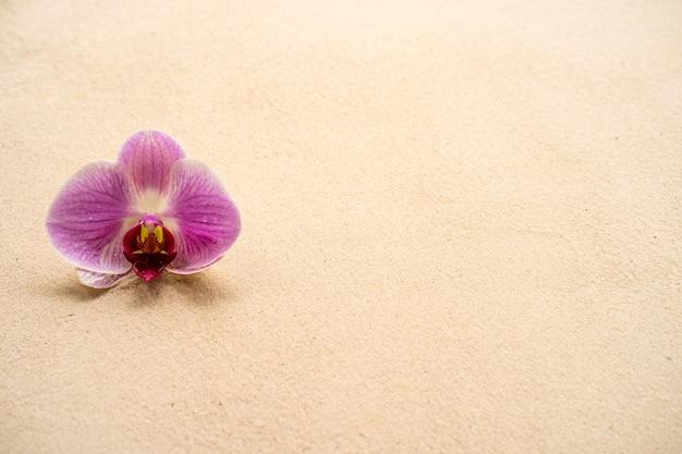 Orchidea phalaenopsis viola del fiore bello su fondo sabbioso.