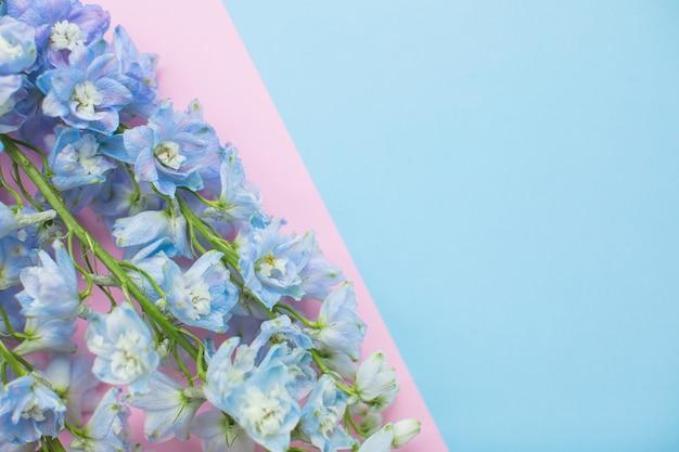 Bellissimo delphinium blu su sfondi di carta multicolore con spazio di copia. primavera, estate, fiori, concetto di colore, festa della donna.
