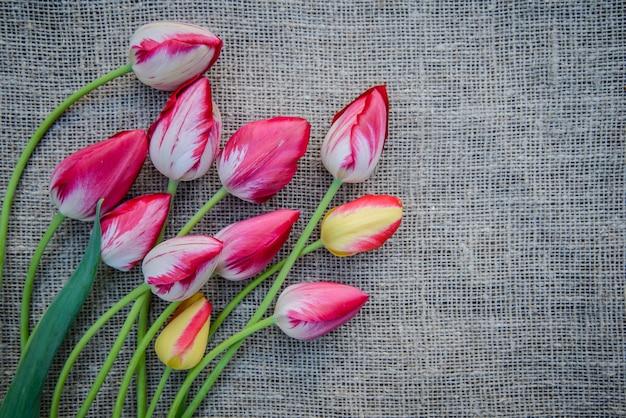 Bellissimo bouquet di tulipani colorati rosa e gialli luminosi su fondo di tela con lo spazio della copia