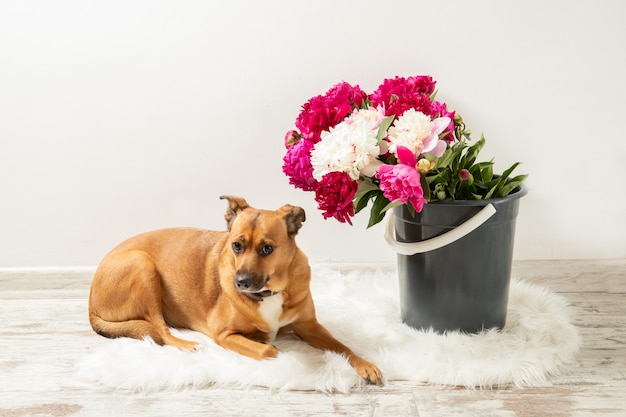 Bellissimo bouquet di peonie e un cane all'interno