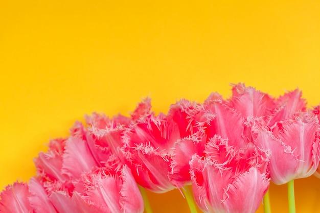Il bello mazzo dei tulipani rosa fiorisce su fondo giallo.