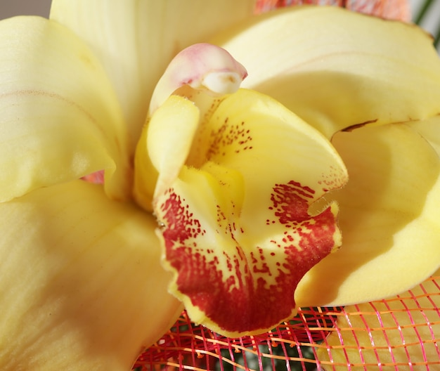 Bellissimo bouquet di orchidee gialle