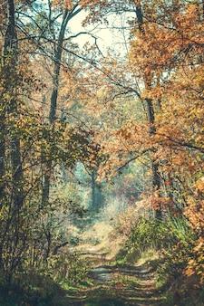 Bellissimo ramo con foglie e strada autunno nella foresta, filtro