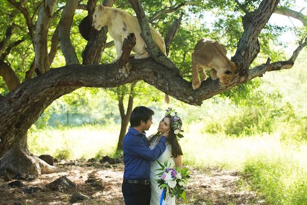 Bella sposa e sposo con due leonesse in natura