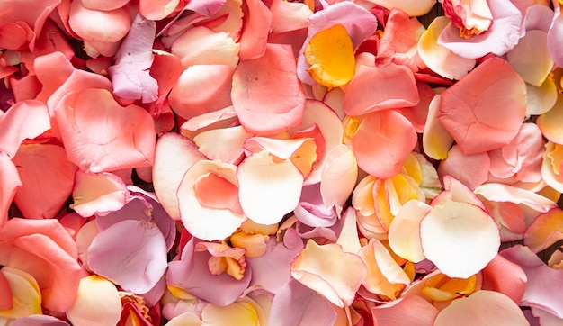 Bellissimo sfondo luminoso di petali di rosa freschi. sfondo di fiori.