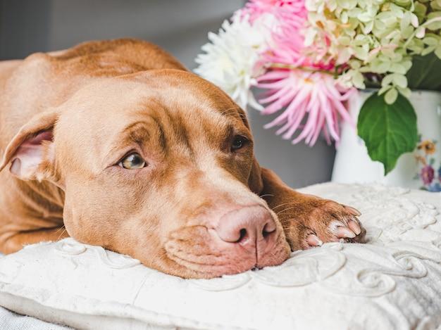 Bellissimo, luminoso bouquet di fiori e grazioso cucciolo. vista laterale, primo piano