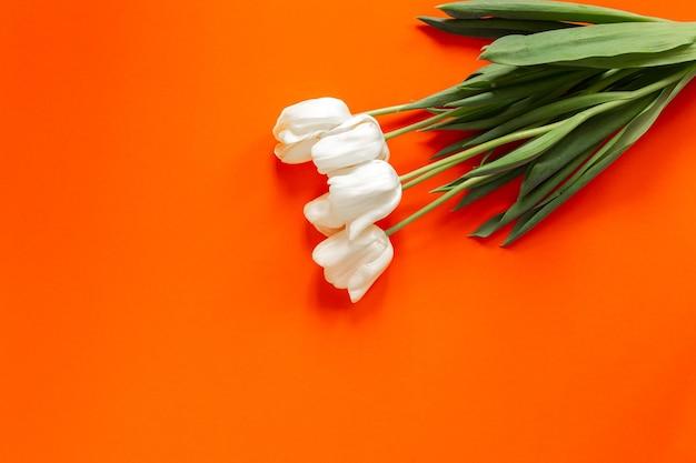 Bellissimi tulipani bianchi e verdi luminosi flatlay sulla parete arancione. concetto di giornata internazionale della donna. copyspace e posto per il testo. isolato.