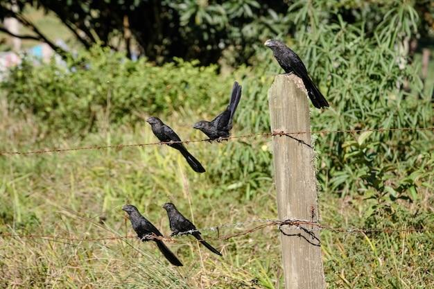 Bellissimo uccello marrone nella foresta e negli alberi