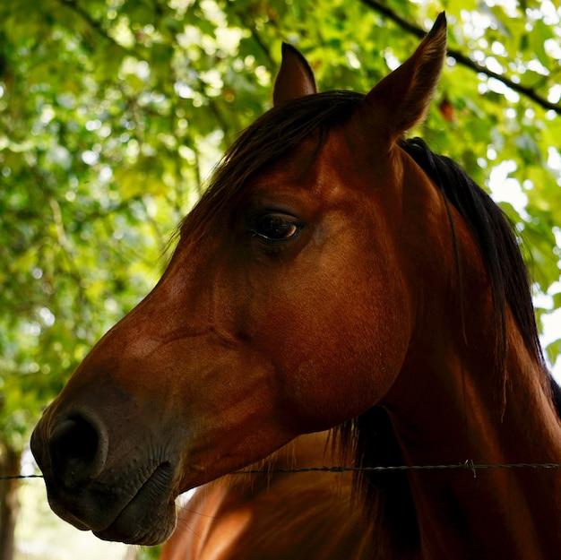 Bellissimo ritratto di cavallo marrone nella natura