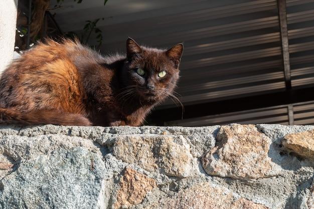 Bellissimo gatto randagio marrone a pelo lungo riposa crogiolarsi al sole del mattino nella giornata internazionale degli animali