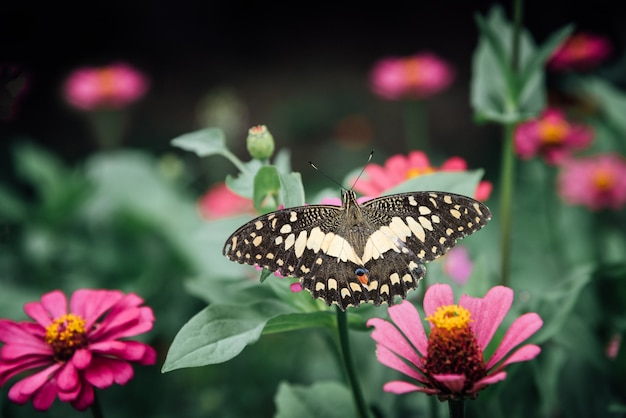 Bellissima farfalla e fiore