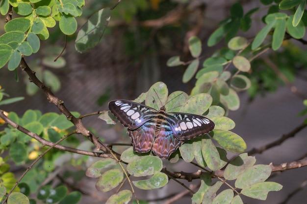 Bella una farfalla sulla foglia verde in giardino.