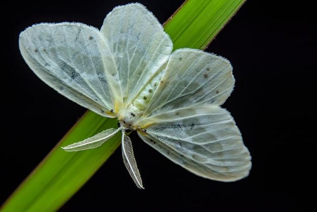 Bella farfalla sulla foglia verde