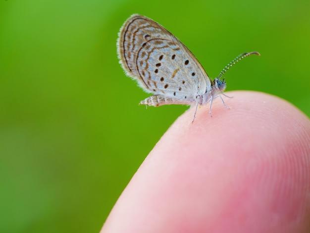 Bella farfalla a portata di mano con sfondo sfocato nella natura