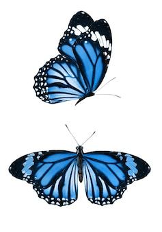 Bella farfalla isolata su sfondo bianco