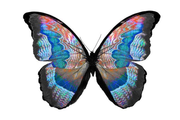 Bella farfalla isolata su bianco. insetto multicolore. animale tropicale. modello per il design