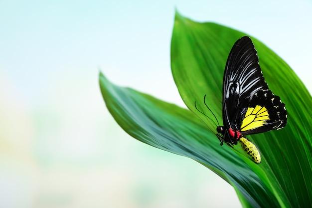 Bella farfalla che si siede sulla foglia verde all'aperto