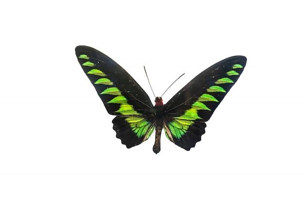 Bellissimo esemplare di farfalla