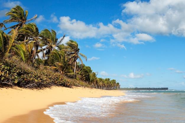 Bellissima spiaggia caraibica con palme e cielo