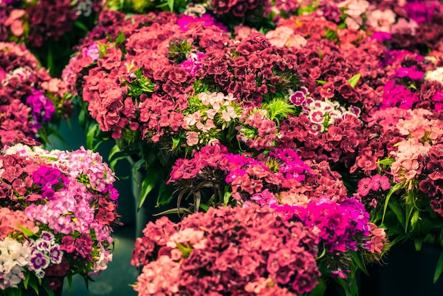 Bellissimi fiori di garofano che vendono in un mercato europeo