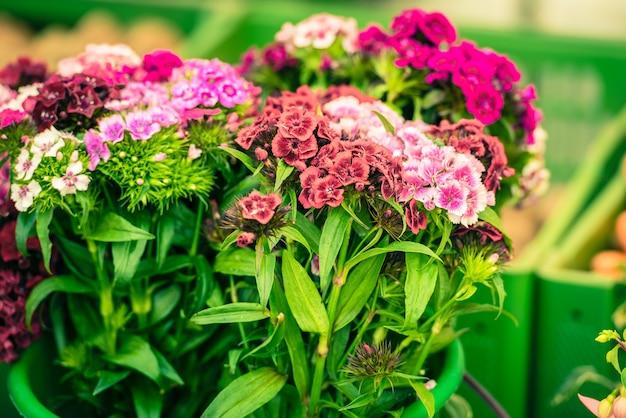 Bellissimi fiori di garofano in vendita in un mercato europeo