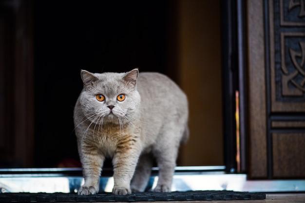 Bellissimo gatto in casa
