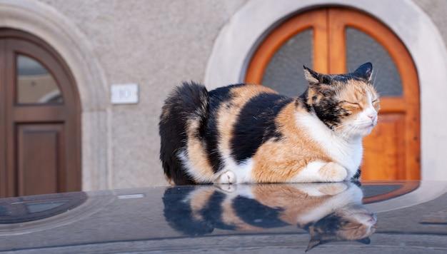 Un bellissimo gatto giace sul tetto dell'auto e si riflette in esso