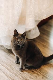 Bellissimo gatto seduto a casa e rilassante