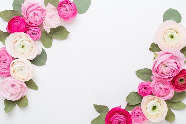 Bei fiori colorati del ranuncolo su una priorità bassa bianca.