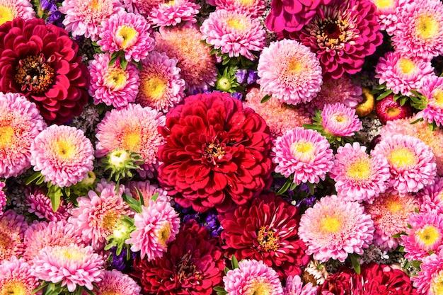 Bellissimi fiori colorati.