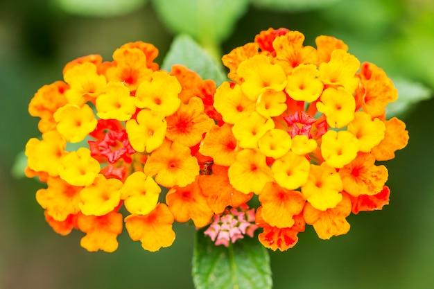 Bei fiori variopinti della barriera