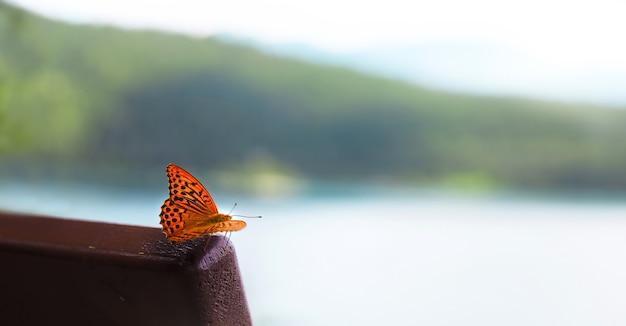 Bella colorata farfalla monarca sullo sfondo di un paesaggio sfocato, il concetto dell'inizio della primavera