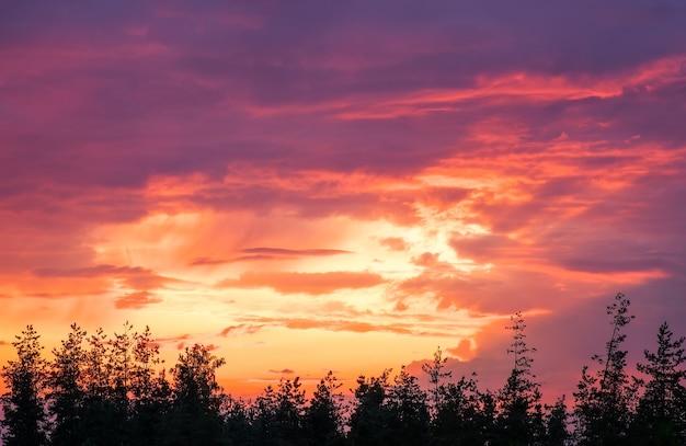 Bellissimo cielo colorato durante il tramonto o l'alba e la cima degli alberi.