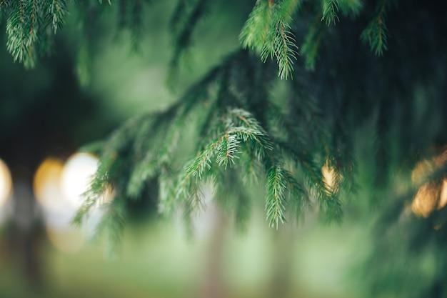 Bellissimo albero di conifere