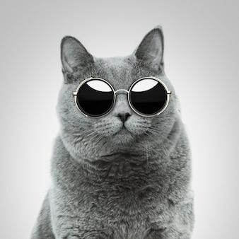 Bellissimo gatto hipster britannico fresco con occhiali da sole rotondi vintage in studio.