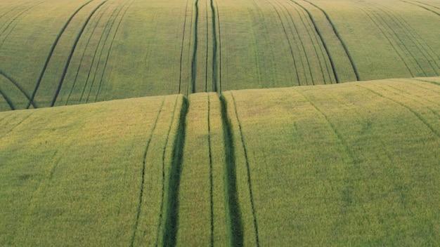 Bellissima campagna con sfondo di campi di grano verde