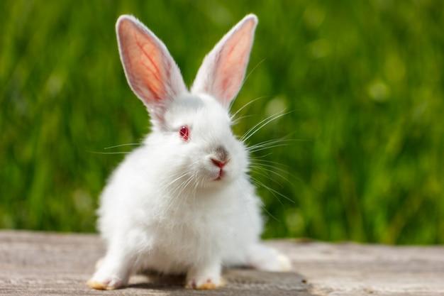 Bel coniglio bianco carino su sfondo verde naturale